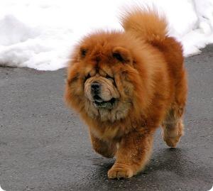 beardog