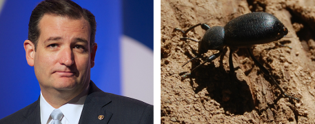 ted cruz and a bug