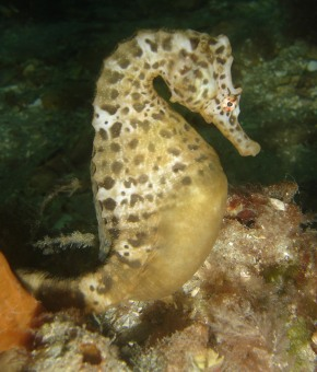 7 Grossest Seahorse Pregnancy Secrets No One Will Tell You