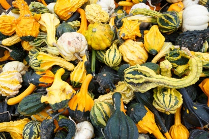 big group of gourds.jpg