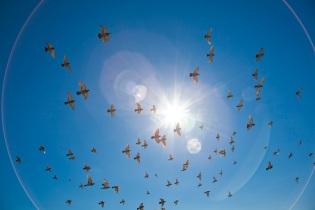 flock-sun