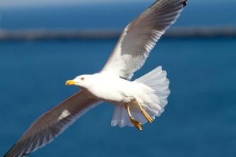 seagull-295875_960_720